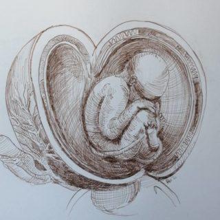 In honour of Leonardo da Vinci Practicing hatching for artclass with Annelies Middel . . . #art #drawing #drawingaday #anatomicdrawing #klassiekeacademie #anatomystudy #Leonardo #davinci #hatching #foetus #baby #penandinkdrawing #leonardodavinci